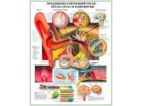 meditsinskiy-plakat-klitora
